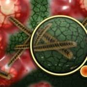 Viren und Bakterien verbreiten sich schnell