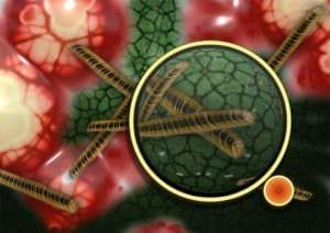 bacteria-108895_1920