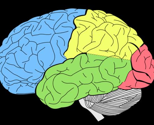 Neurochirugie und Ihr Recht