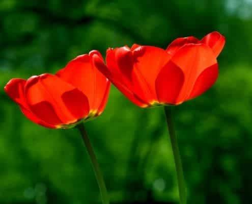 spring-739215_1920